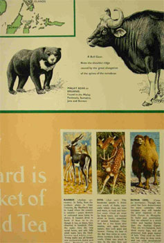 Asian Wild Life wallchart