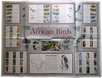 African Birds wallchart